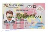 Maryland Driver License Blank Template